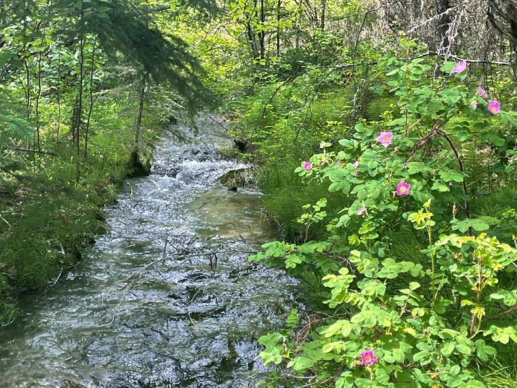 Dl 7561 Baptiste Trail, Radium Hot Springs, British Columbia  V0A 1M0 - Photo 15 - 2456990
