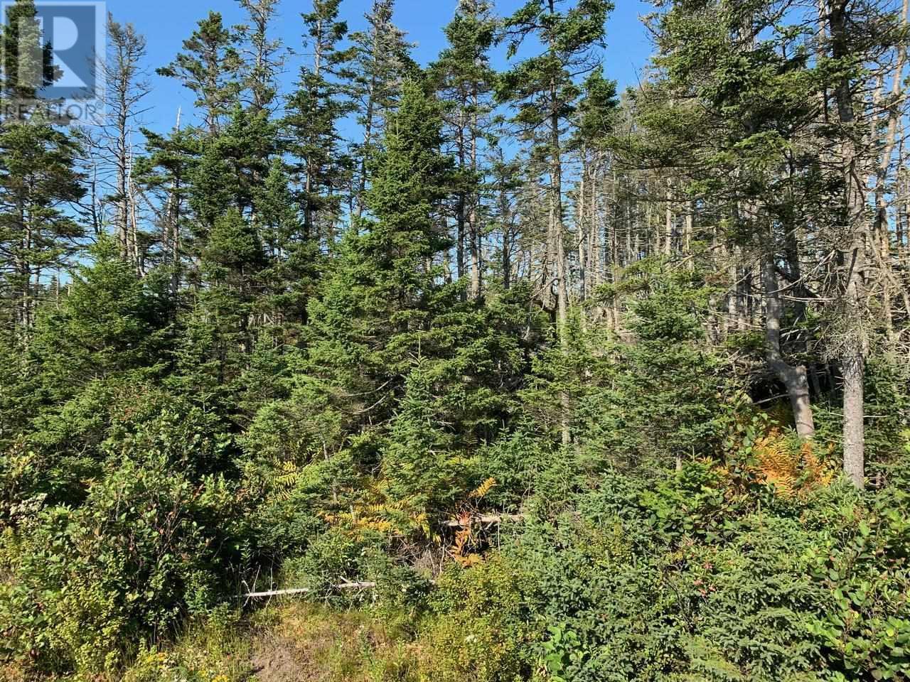 Lot A9 Ostrea Lake Road, Ostrea Lake, Nova Scotia  B0J 2L0 - Photo 4 - 202125328