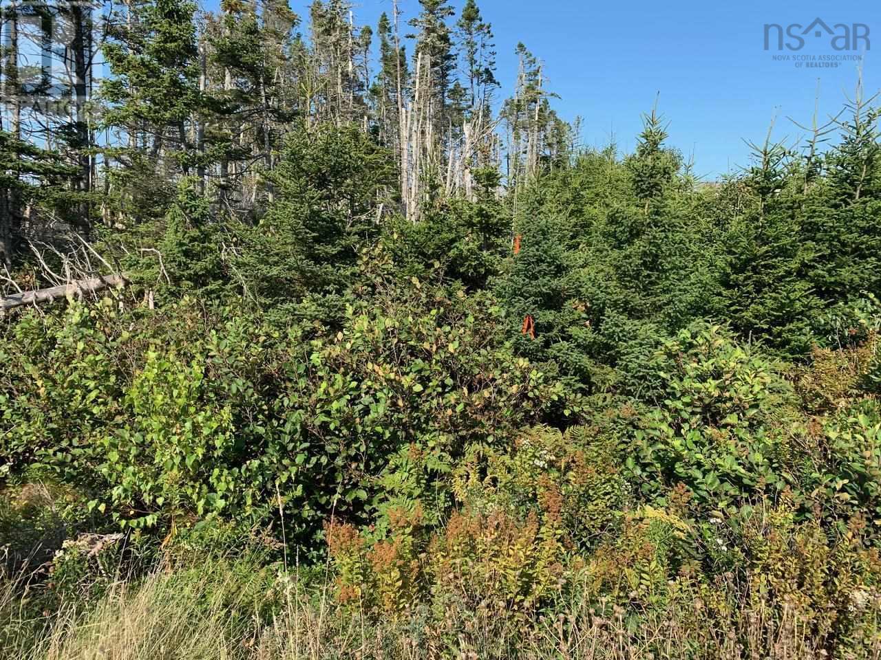 Lot A9 Ostrea Lake Road, Ostrea Lake, Nova Scotia  B0J 2L0 - Photo 6 - 202125328