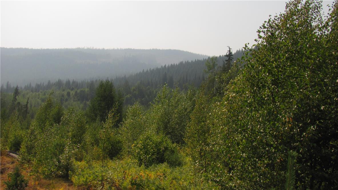 136acres Sugar Lake-Sihlis Road,, Vernon, British Columbia  V1H 2B1 - Photo 10 - 10139930