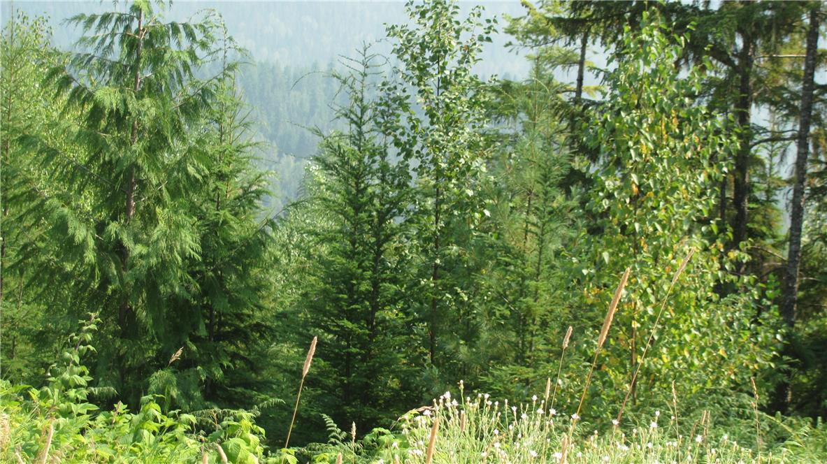 136acres Sugar Lake-Sihlis Road,, Vernon, British Columbia  V1H 2B1 - Photo 11 - 10139930