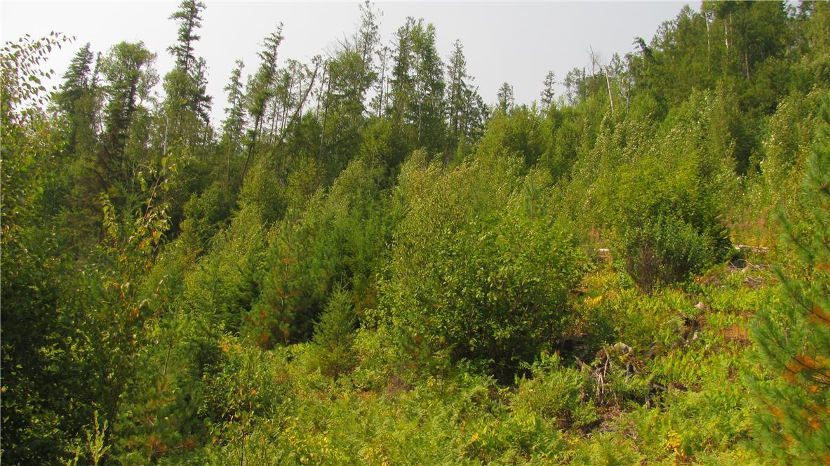 136acres Sugar Lake-Sihlis Road,, Vernon, British Columbia  V1H 2B1 - Photo 15 - 10139930