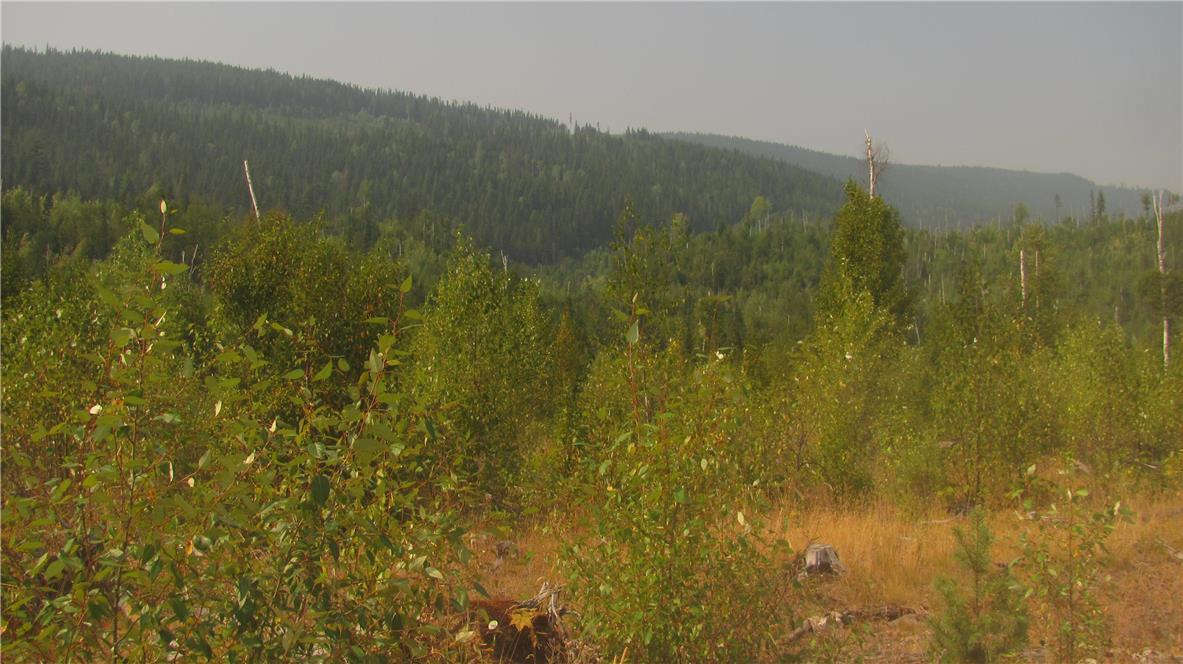 136acres Sugar Lake-Sihlis Road,, Vernon, British Columbia  V1H 2B1 - Photo 16 - 10139930