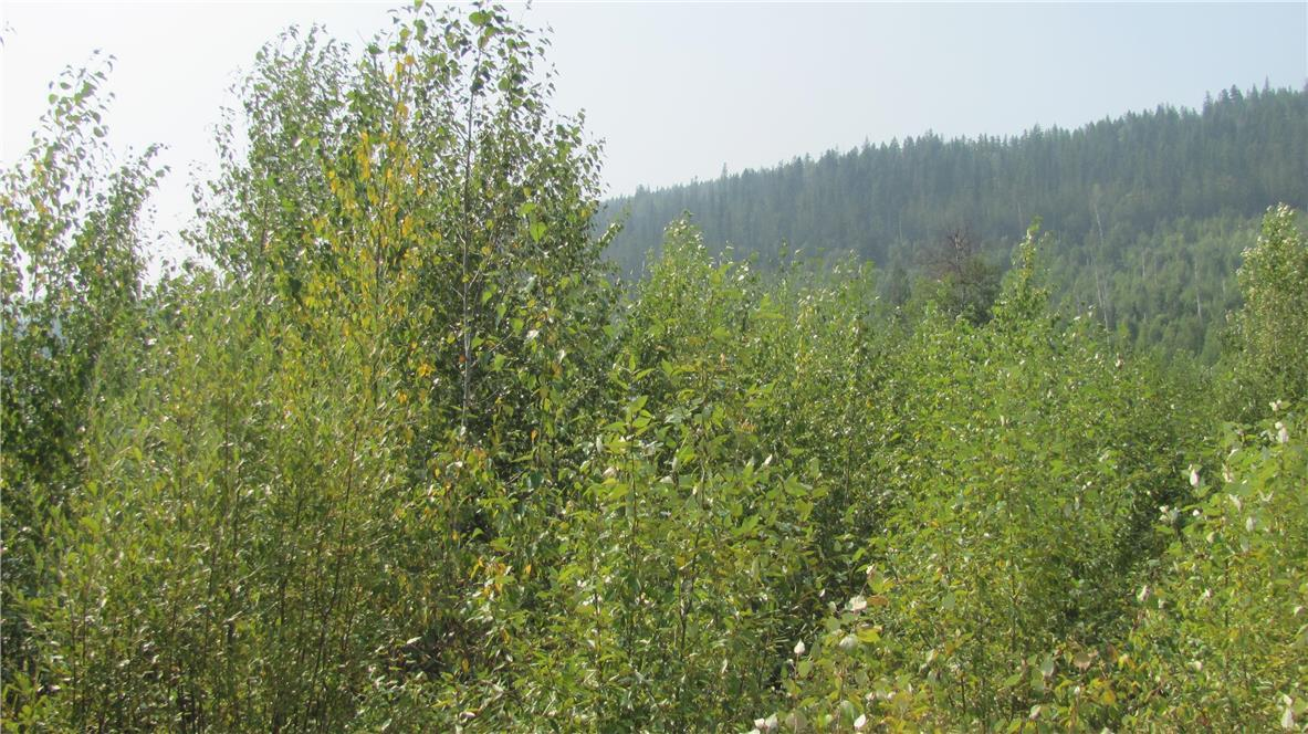 136acres Sugar Lake-Sihlis Road,, Vernon, British Columbia  V1H 2B1 - Photo 29 - 10139930
