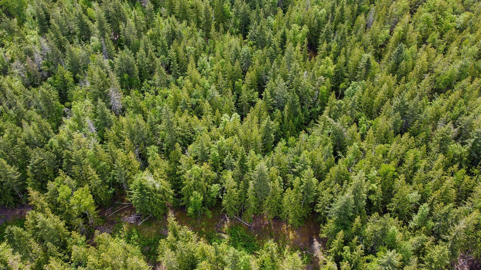 Lot 1-5 Blind Bay Road,, Blind Bay, British Columbia  V0E 1H0 - Photo 36 - 10232466